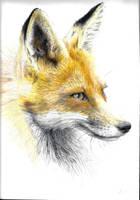 Majestic Fox by StarvedFox
