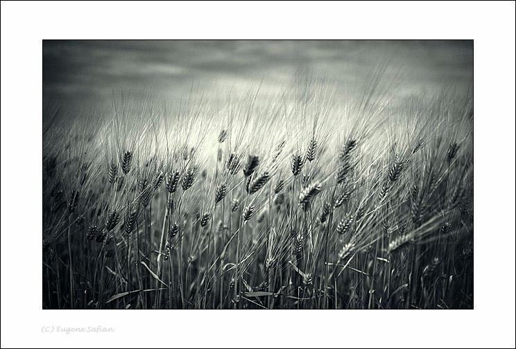 Field by ESafian