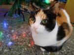 Bella Under the Christmas Tree