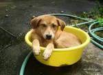 I want a bath by tomomi11