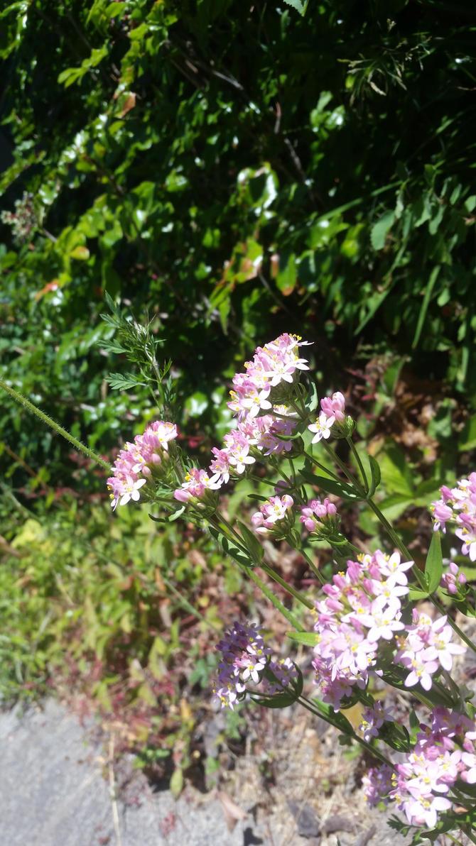 Summer's Bloom by angelfish666