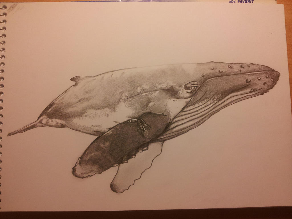 Humpback whale drawing by Trininyanyus on DeviantArt