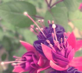 Fairy's Flowers