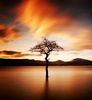 'That Tree' by kharashov