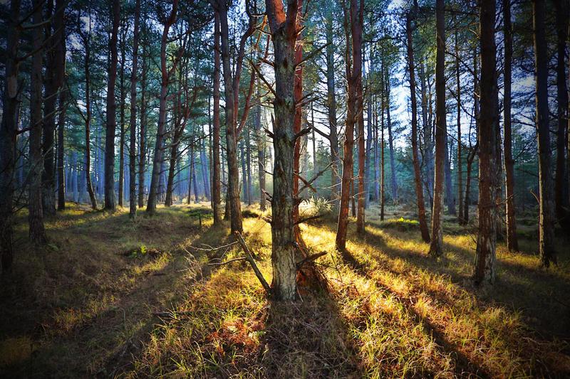 Wood Glows by kharashov