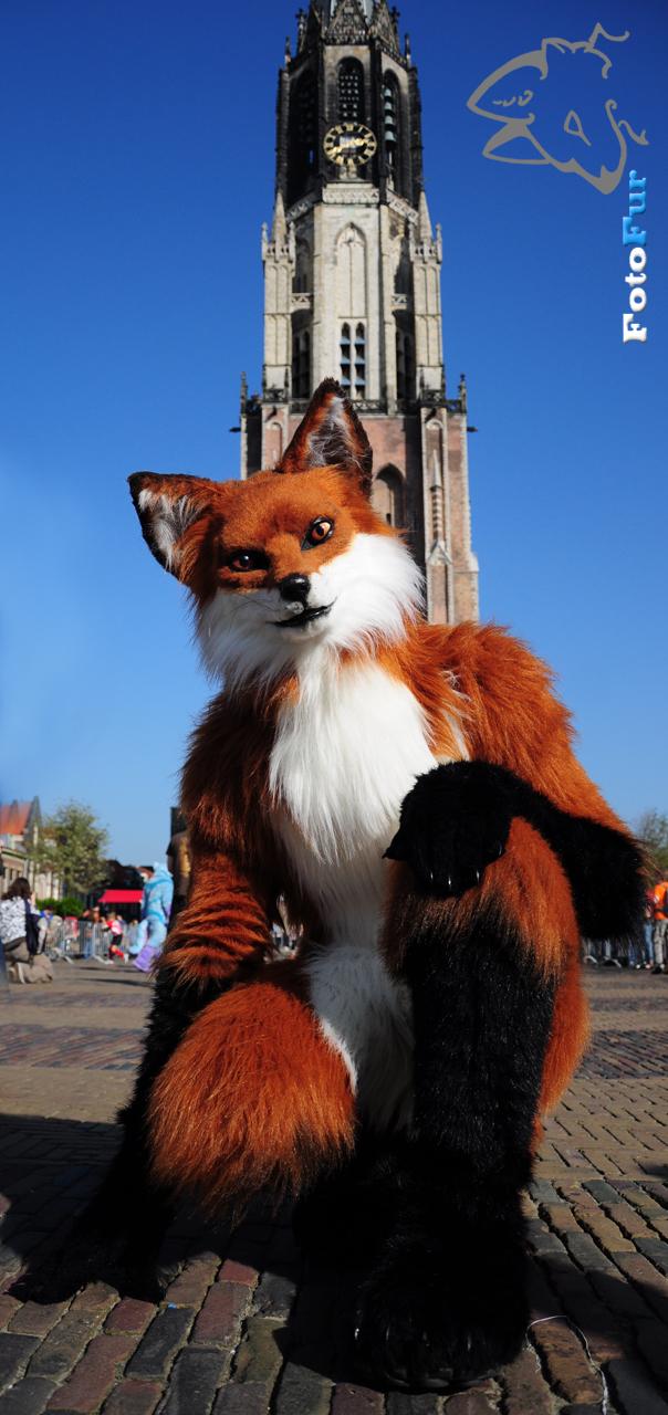 Fox by FotoFurNL