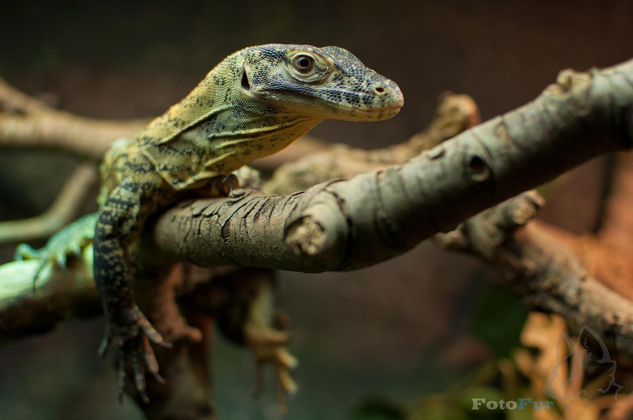 lizard wallpaper by fotofurnl on deviantart