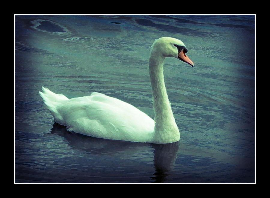 SWAN by rosebud10