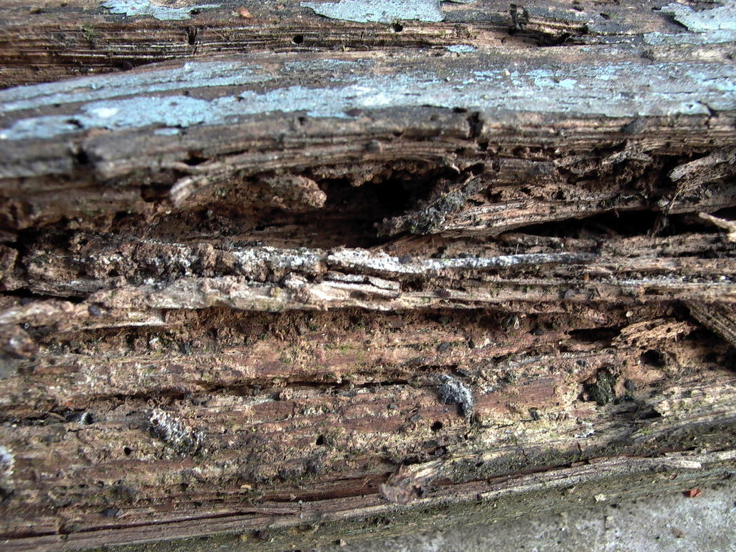 Rotting wood by rosebud10