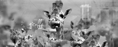 Giraffe by Negto