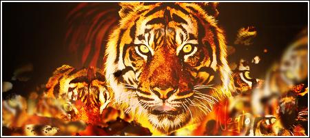 Tiger signature by Negto