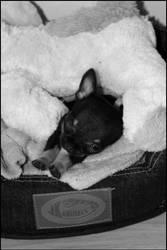 My new Puppy! by Negto