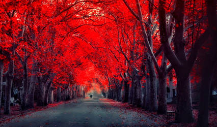 Walking under the red autumn trees (Exclusive) by ROGUE-RATTLESNAKE