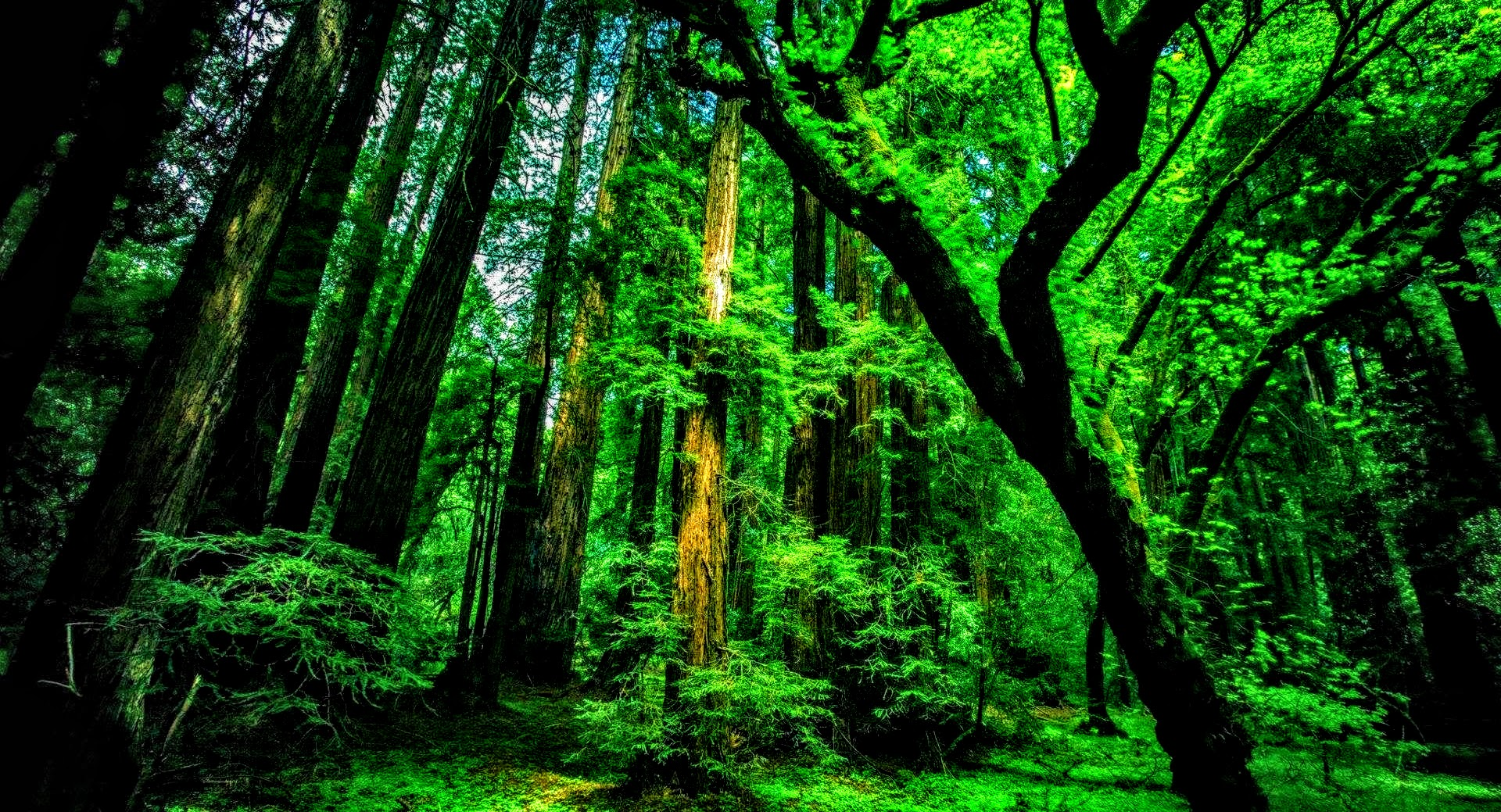Natural Green Forest Wallpaper (Exclusive) By ROGUE