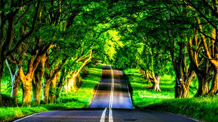 Paved Road Under Green Forest Trees by ROGUE-RATTLESNAKE