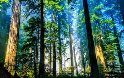 Beautiful Ground View of The Forest Landscape by ROGUE-RATTLESNAKE