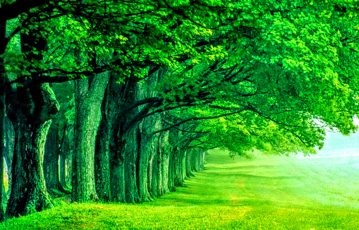 Beautiful High Quality Green Nature Wallpaper By ROGUE RATTLESNAKE