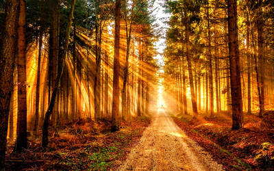 Gleaming Sunlight Shining the Trees on to Path 2 by ROGUE-RATTLESNAKE
