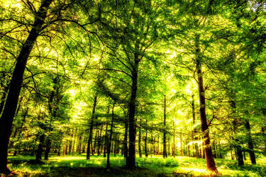 Beautiful Green Landscape and Oak Trees by ROGUE-RATTLESNAKE