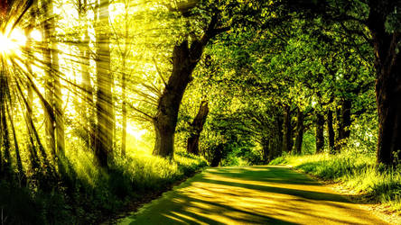 Sunrise Shining the Spring Trees on to Roadway by ROGUE-RATTLESNAKE