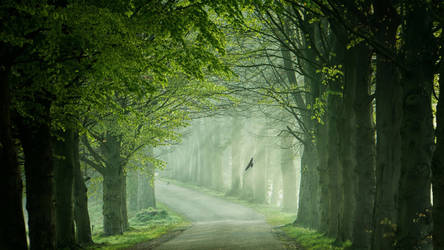Nature Path Of Green Trees and Nature by ROGUE-RATTLESNAKE