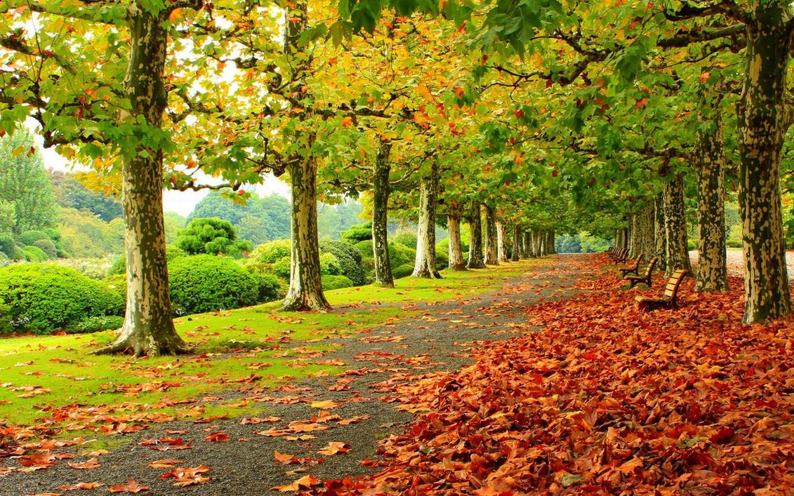 beautiful autumn trees and landscape wallpaperrogue-rattlesnake