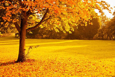 Beautiful Golden Autumn Landscape and Tree Theme by ROGUE-RATTLESNAKE