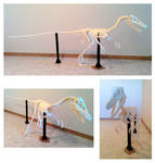 Velociraptor Skeleton Papercraft (Build)
