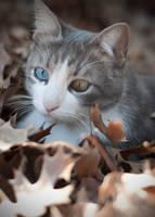 autumn cat by dianasabbath