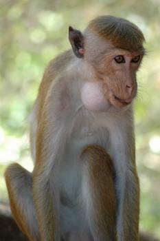 monkeys 4