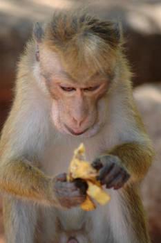 monkeys 5