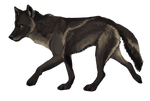 WOLF PREMADE: SOLD