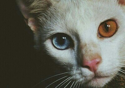 If Garrett Was a Cat by minism