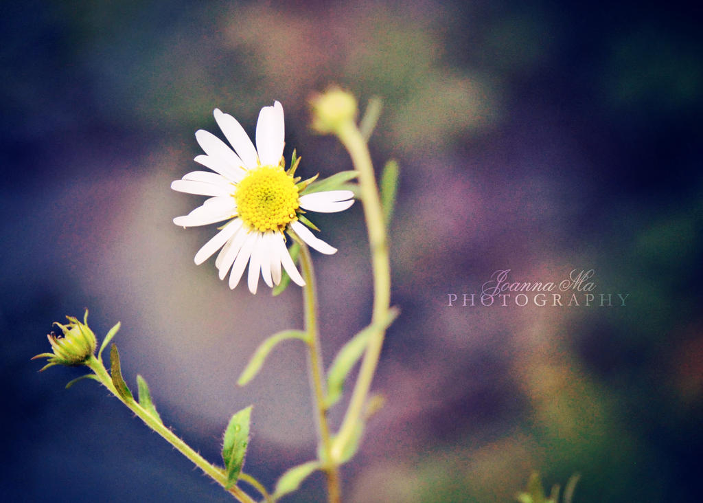 Forget me.. by Capere-Omnes