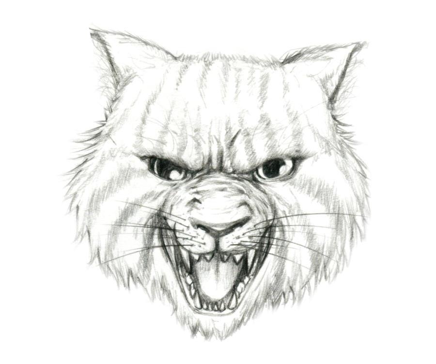 angry animal drawing - photo #22