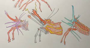 Beak shrimp (part 2)