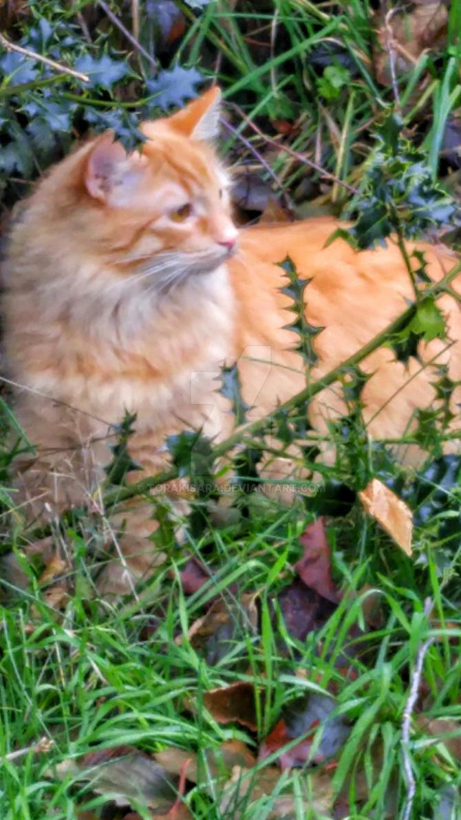 out door cat by torakisara