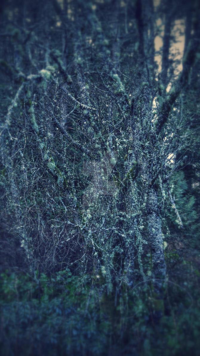 Moss on trees. by torakisara