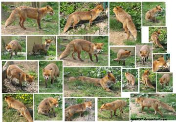 Stock fox on the walk by lyoth737