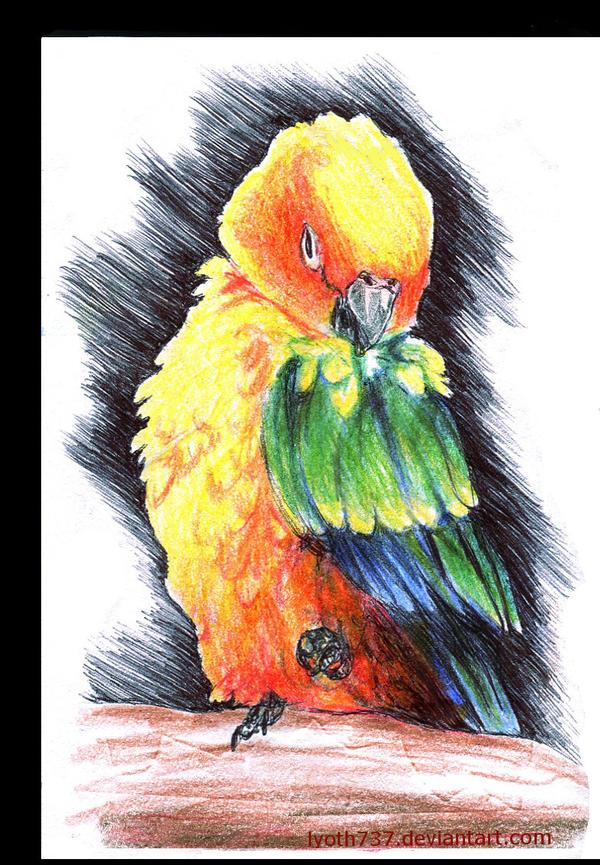 Love-tidy-bird by lyoth737