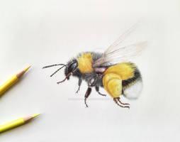 A little bumblebee