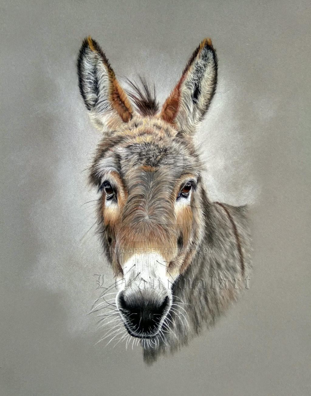 Donkey by Lin-a-art