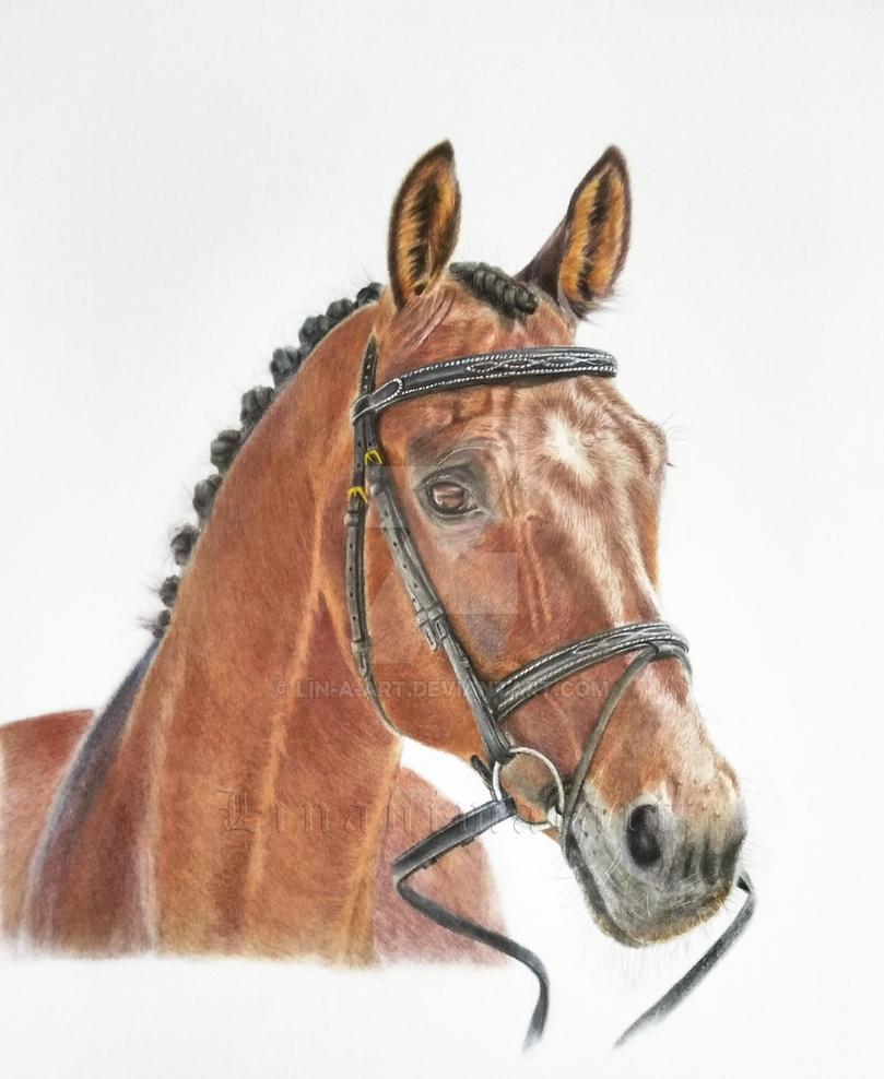 Oldenburger Portrait by Lin-a-art