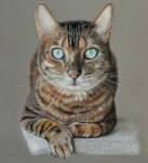 Loki, Bengal cat by Lin-a-art