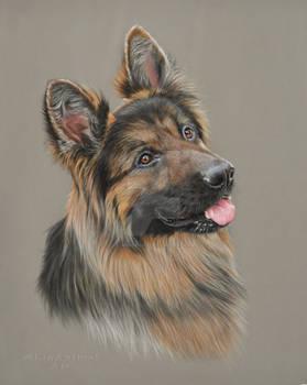 The German Shepherd Portrait