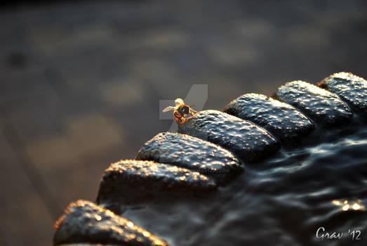 Bee Bath