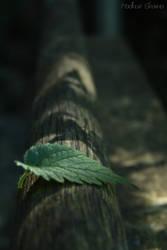 leaf on wood by noorieyuri