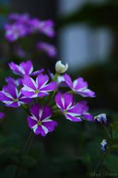 purple flower by noorieyuri