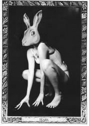 oracle card rabbit by lelfling