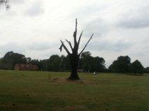 Golf Course tree by MJandGhostAdventures